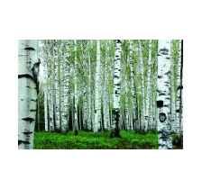 东北白桦林旅游