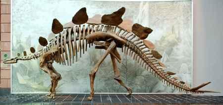 恐龙骨架模型
