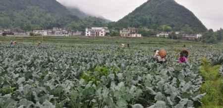 德江蔬菜示范基地