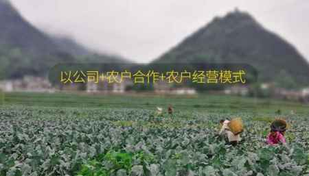 德江蔬菜公司批发